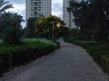 Parc d'allée avec les arbres de floraison jaunes du côté avec une lampe allumée de ville dans la distance et les édifices hauts photos libres de droits