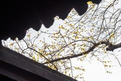 Parc d'aquarelle de la Chine Rugao Photographie stock libre de droits