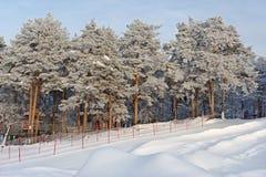 Parc d'attractions avec les arbres coniféres en hiver Photos stock