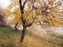 Parc d'automne Photos libres de droits