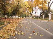 Parc d'automne Images libres de droits