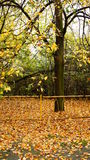 Parc d'automne photo stock