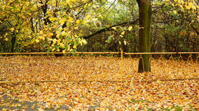 Parc d'automne photographie stock