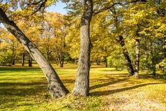 Parc d'automne photo libre de droits
