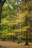 Parc d'automne avec les arbres jaunes et verts du château de Blatna République Tchèque image stock
