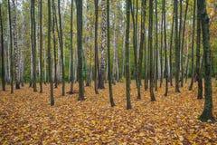 Parc d'automne avec les feuilles tombées jaunes photo stock