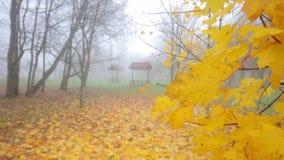 Parc d'automne enveloppé en brouillard épais banque de vidéos