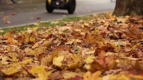 Parc d'automne extérieur banque de vidéos