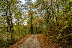 Parc d'automne 2008 lames d'or de lame de plantation d'automne sec d'automne d'air près de chêne octobre Russie tourne qui enroul photos stock