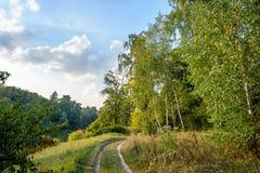 Parc d'automne 2008 lames d'or de lame de plantation d'automne sec d'automne d'air près de chêne octobre Russie tourne qui enroul photo stock