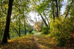 Parc d'automne 2008 lames d'or de lame de plantation d'automne sec d'automne d'air près de chêne octobre Russie tourne qui enroul photos libres de droits