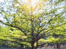 Parc d'environnement de nature de vert forêt de branches d'arbre de tache floue Photographie stock libre de droits