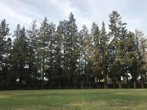 Parc d'herbe d'arbres de séquoia Photos libres de droits