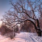 Parc d'hiver au coucher du soleil Photo stock
