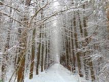 Parc d'hiver de beauté Photographie stock libre de droits