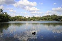 Parc d'Ibirapuera, Sao Paulo, Brésil Images libres de droits
