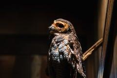 Parc d'oiseau de Bali l'indonésie Photographie stock