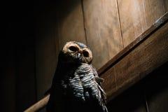 Parc d'oiseau de Bali l'indonésie Photo libre de droits