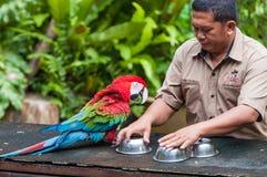Parc d'oiseau de kilolitre Photos stock