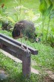 Parc d'oiseaux de Bali Photographie stock libre de droits