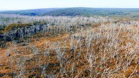 Parc d'Otway Nationa de cap, Australie Silhouette d'homme se recroquevillant d'affaires Photo libre de droits