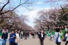Parc d'Ueno pendant la saison de fleurs de cerisier Photo libre de droits