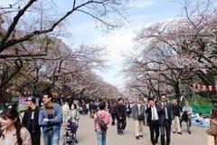 Parc d'Ueno pendant la saison de fleurs de cerisier Image stock