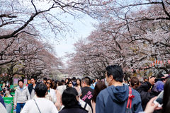 Parc d'Ueno pendant la saison de fleurs de cerisier Photographie stock