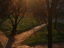 Parc dans le lever de soleil photographie stock
