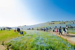 Parc de bord de la mer de Hitachi - fleurs bleues en avril photos libres de droits