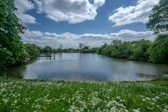 Parc de bruyère de Hampstead photo libre de droits