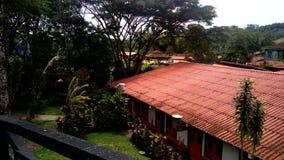 Parc de café et x28 ; colombia& x29 ; Image stock