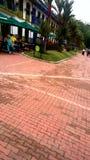 Parc de café et x28 ; colombia& x29 ; Images libres de droits