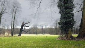 Parc de château avec de grands arbres Jardin d'agrément avec des feuilles d'enroulement en vent banque de vidéos