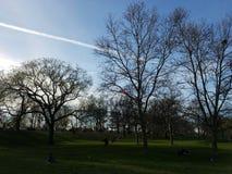 Parc de ciel de soirée d'arbre de branche d'horizon images libres de droits