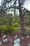 Parc de Foros Photos libres de droits