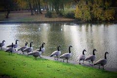 Parc in de herfst in Liverpool Royalty-vrije Stock Fotografie