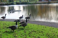 Parc in de herfst in Liverpool Stock Afbeelding