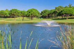 Parc de jardin d'été avec le lac et les canards Photos stock