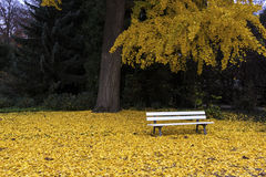 Parc de l'Orangerie in Strasbourg. White bench in the park covered with yellow leaves stock photography