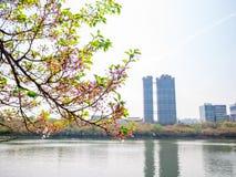 Parc de lac Seokchon dans la saison d'été à Séoul, Corée du Sud images stock