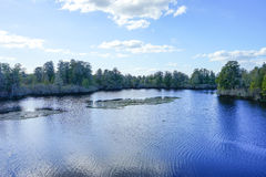 Parc de laitue à Tampa photo libre de droits