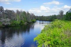 Parc de laitue à Tampa Image libre de droits