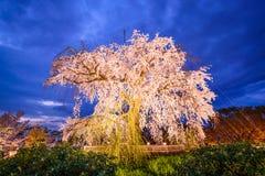 Parc de Maruyama à Kyoto Photographie stock libre de droits