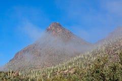 Parc de montagne de Tucson en brouillard Photographie stock libre de droits