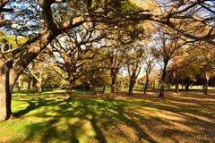 Parc de Montevideo Photographie stock