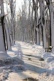 Parc de neige d'hiver image stock