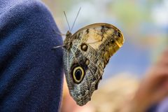 Parc de papillon à Valence une visite de nécessité Photo libre de droits