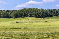 Parc de paysage de Suwalki en Pologne Images libres de droits