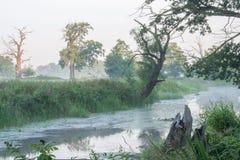 Parc de paysage de Rogalin - lac et pré d'aoxbow avec l'arbre dans la brume après lever de soleil image stock